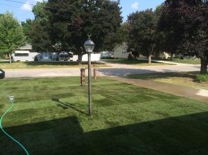 Grass! Actual grass!