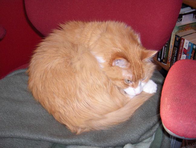 A Cat Lying in Wait
